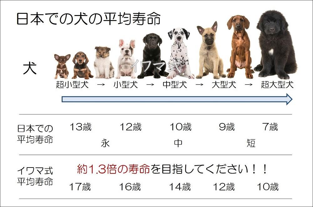 の 寿命 犬 平均